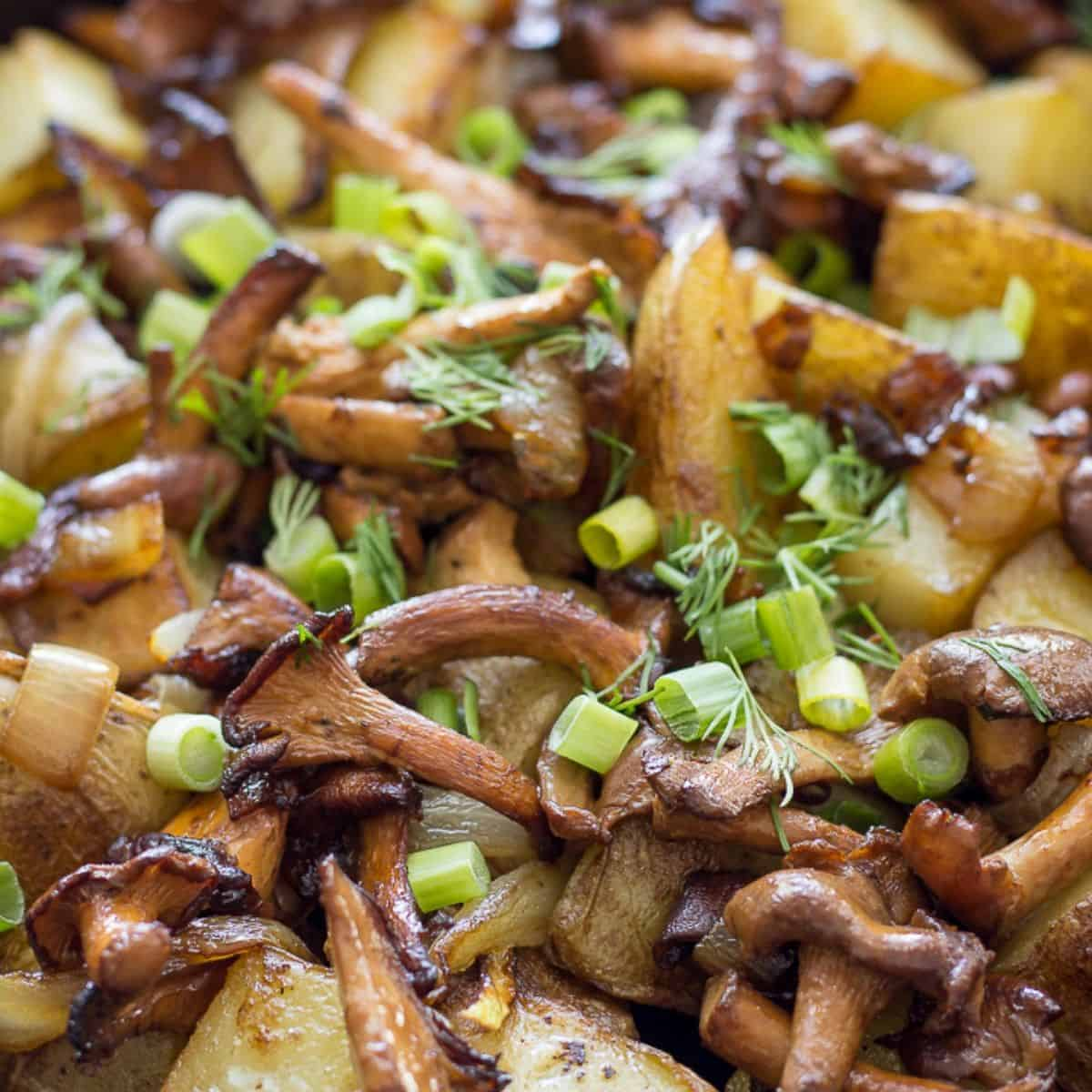 Fried Chanterelle mushrooms and potatoes in a pan